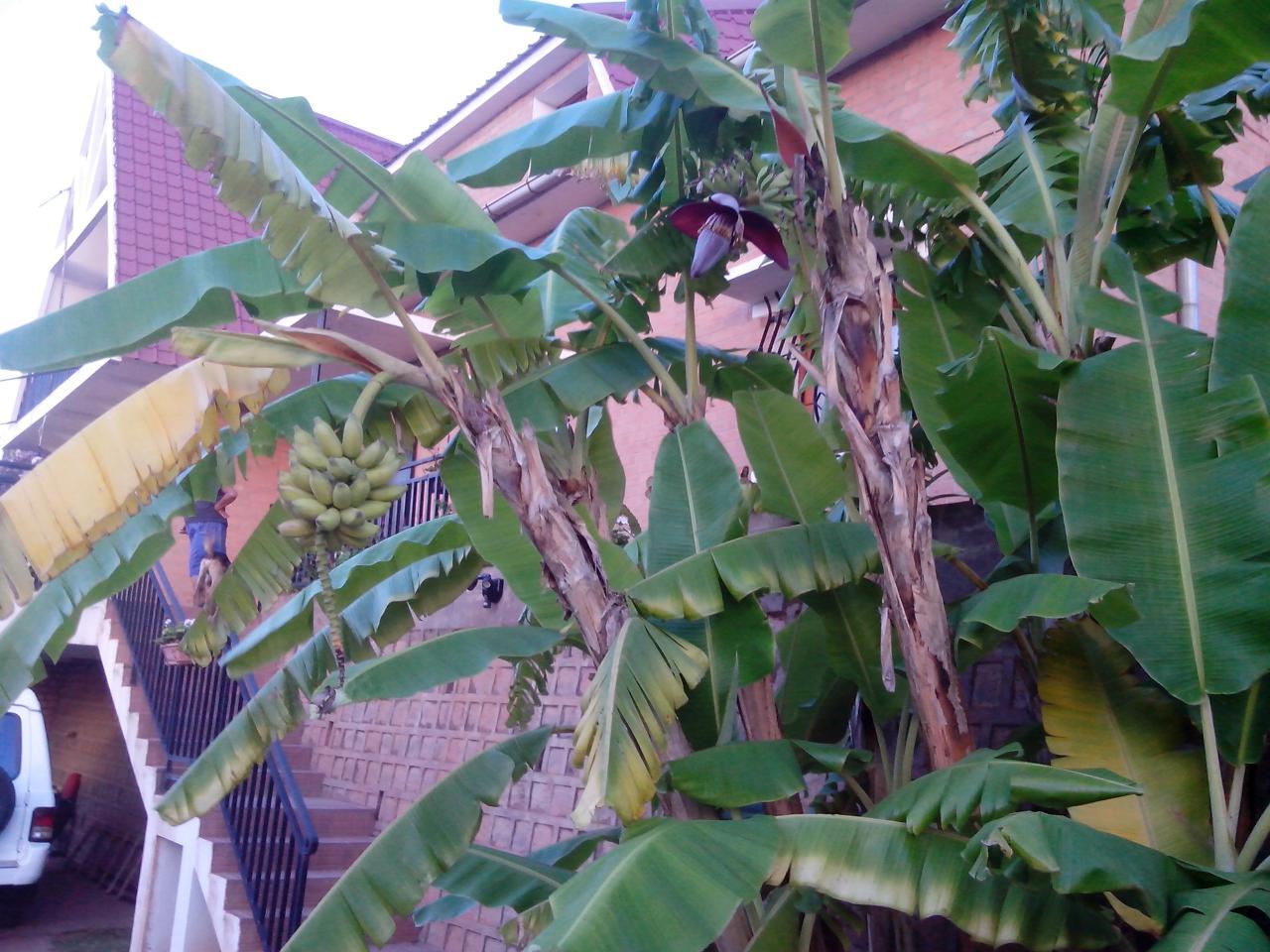 080 Fruits du jardin
