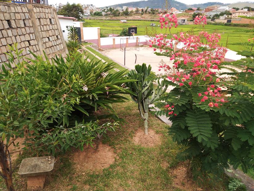 Des fleurs à proximité du terrain de jeux
